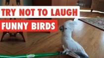 Try-Not-To-Laugh-Funny-Birds-Video-Compilation-2017