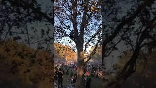 Drunk-girl-falls-off-tree
