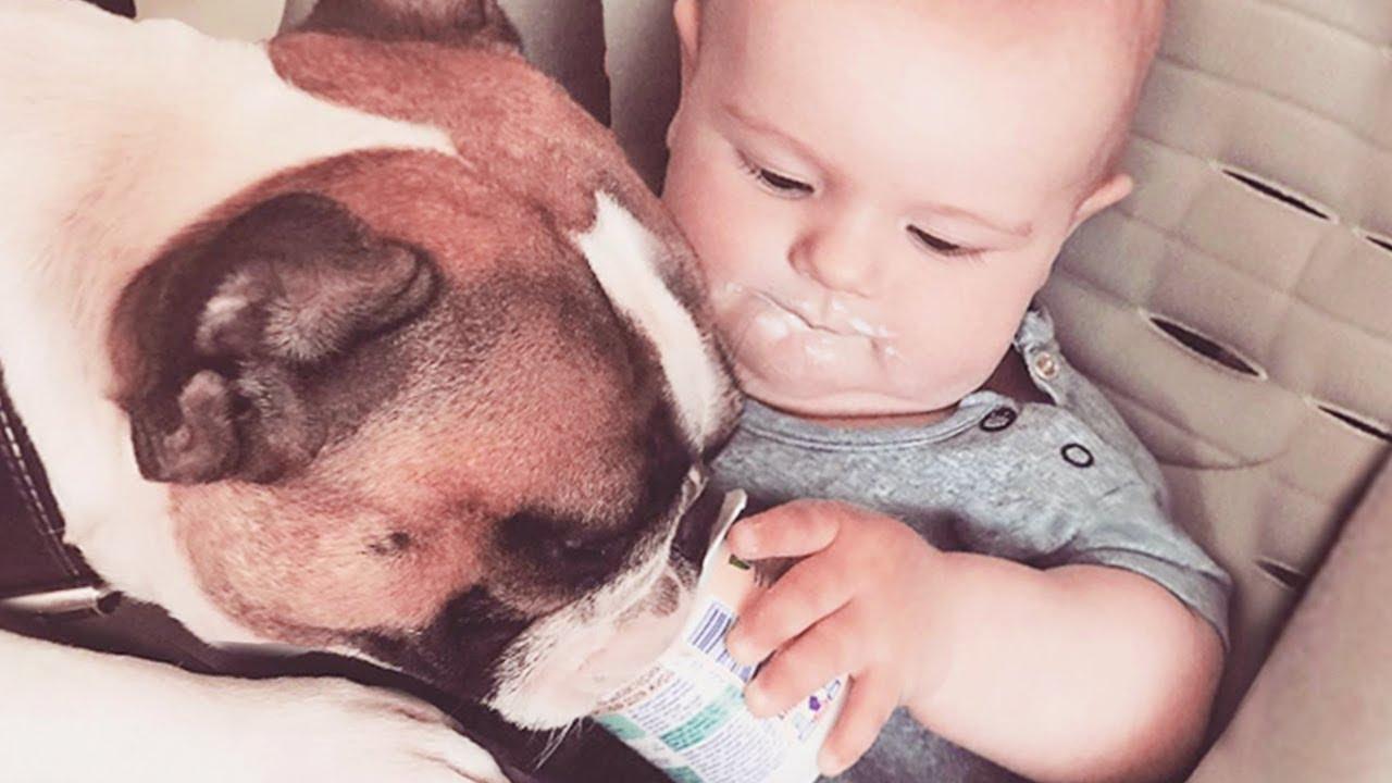 Смешные собаки и детская еда